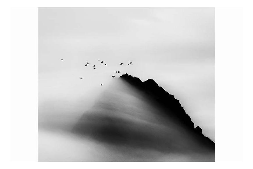Carsten Egevang© - Thule, Groenlandia, 2014